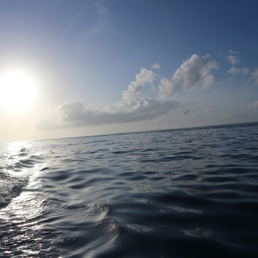 Delfiinijahdissa